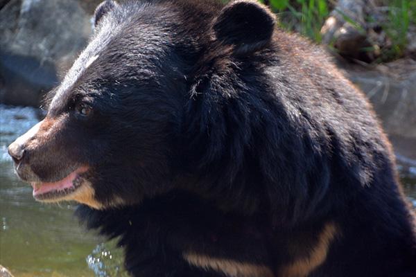 若在野外看到熊,宜保持適當距離,安靜的儘速離開
