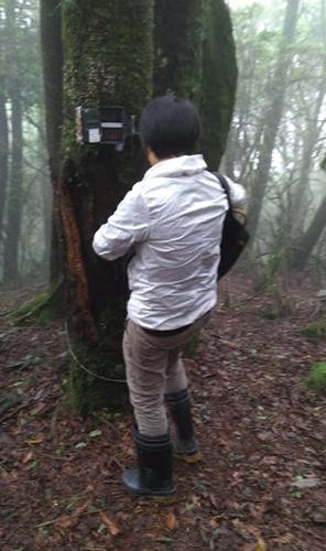 楠溪林道水鹿調查自動照相機架設