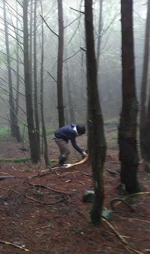 楠溪林道水鹿調查樣樹標記