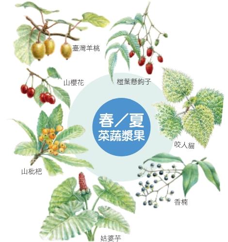春夏食用菜蔬漿果