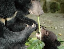 通常一歲之前都是跟在媽媽身邊,受到保護並學習辨 認可食用的食物