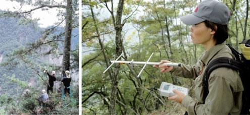 研究團隊進行地面三角定位無線電追蹤臺灣黑熊